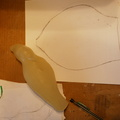 4. The Dip Seal shell has been spread out as flat as possible on a sheet of paperand traced around with a pencil.